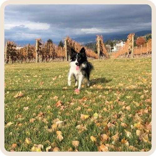 Priya - Moraine Winery Dogs