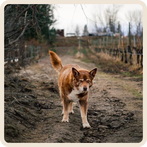 Fozzy - Summerhill Winery Dogs